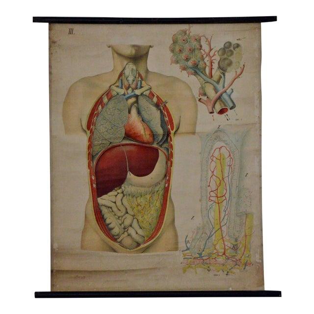 E. Hoelemann Antique Anatomical Chart - Image 1 of 7