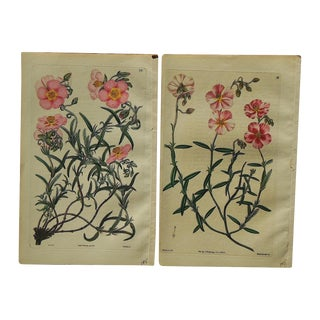 Antique Botanical Engravings - A Pair For Sale