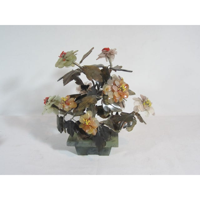 Asian Jade Tree in Planter - Image 3 of 5
