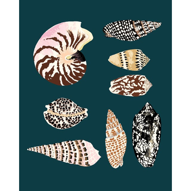 """""""Fiji Shells in Teal"""" Contemporary Giclee Print by Sarah Gordon For Sale"""