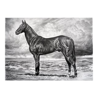"Contemporary ""Black Akhal Teke I"" Rick Shaefer Charcoal Print For Sale"