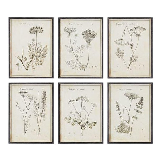 Wildflower Study Illustration Prints - Set of 6 For Sale