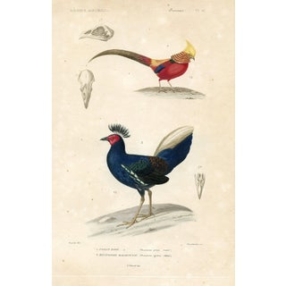 1850 Pheasant Print For Sale