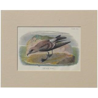 "1890 ""Fork Tailed Petrel"" Original Chromolithograph For Sale"