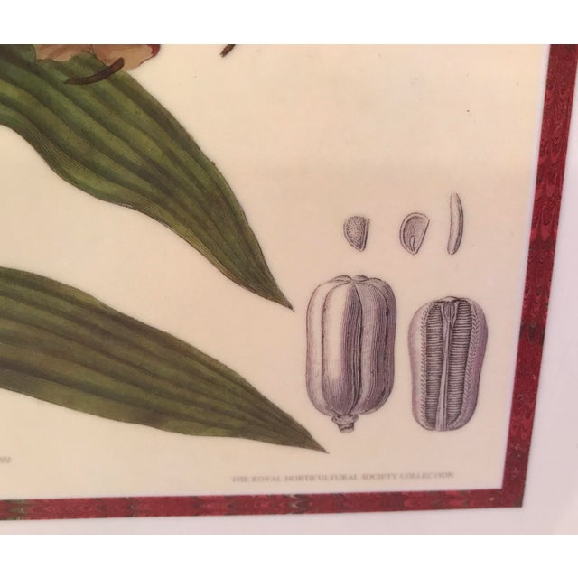 Vintage Royal Horticulture Society Collection Tray - Image 6 of 11