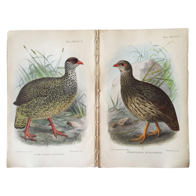 Ornithological Chromolithograph Prints - Pair For Sale