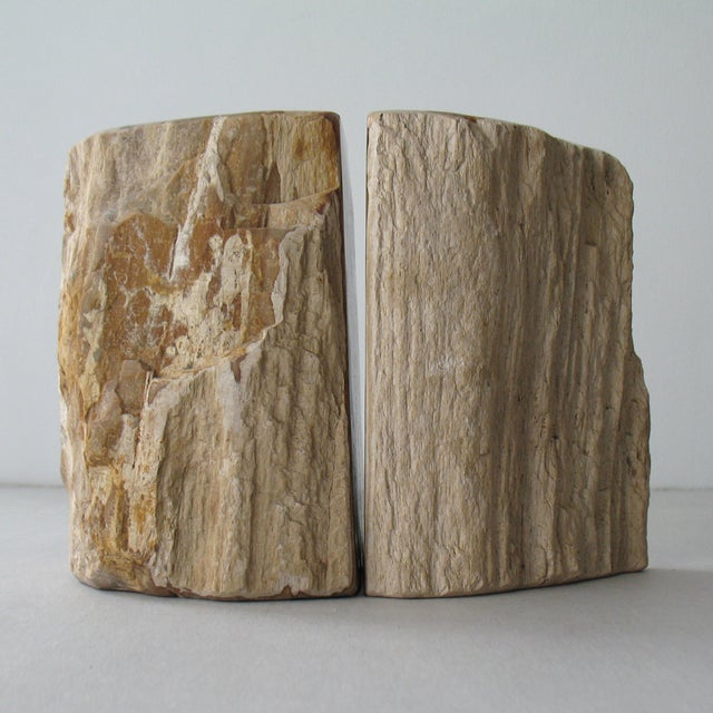 Petrified Wood Bookends - A Pair - Image 5 of 9