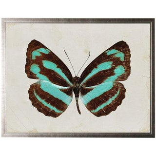 "Dark Brown and Turquoise Striped Butterfly - 29.5"" X 23.5"" For Sale"