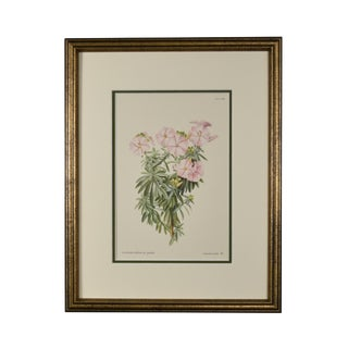 1958 Vintage Original English Flower Botanical Framed Print For Sale