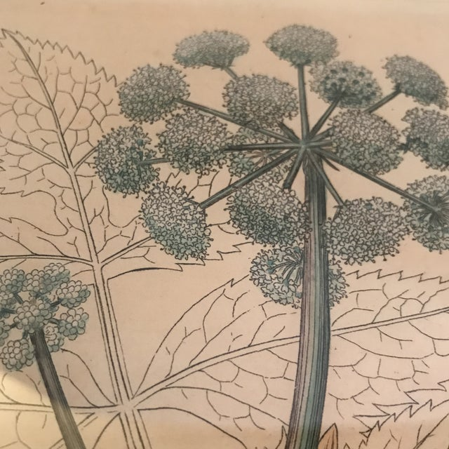 Framed Botanical Engravings - a Pair For Sale - Image 12 of 13