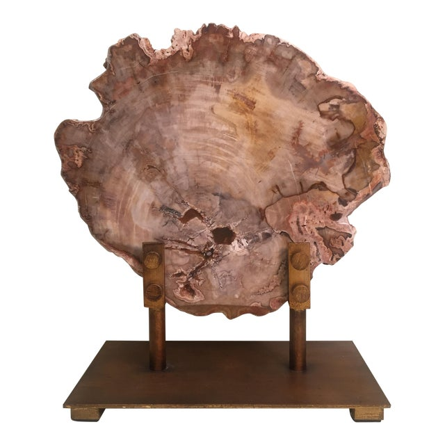 Petrified Wood Tree Slice on Museum Stand For Sale