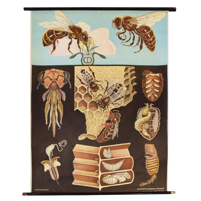 German Educational Poster of Wasps - Image 1 of 4