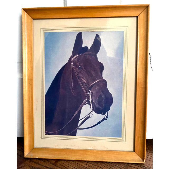 Mid 20th Century Horse Portrait Photograph, Framed For Sale - Image 9 of 9