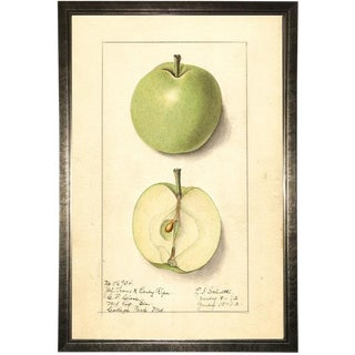 Green Apple Study in Pewter Shadowbox 17x25 For Sale