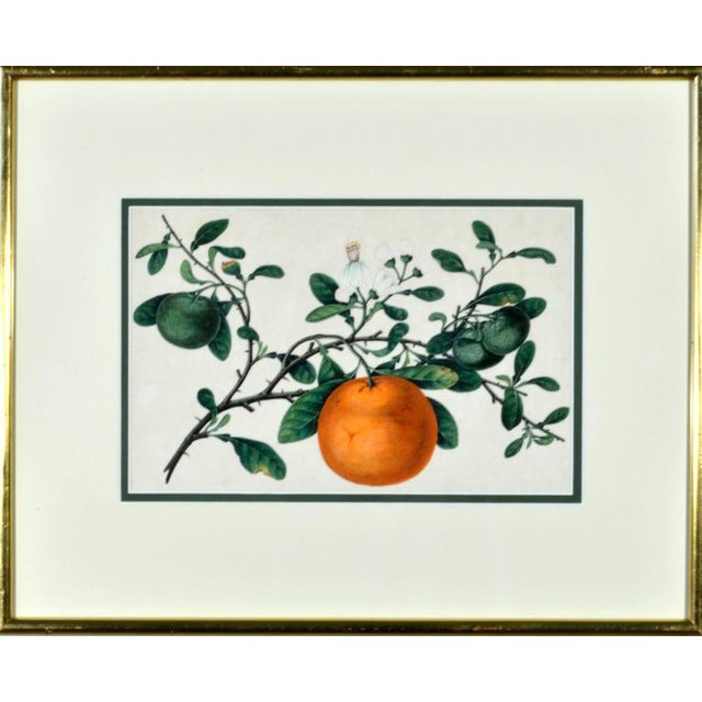 White Chinese Fruit Watercolor Paintings on Pith Paper - Set of 8 For Sale - Image 8 of 10