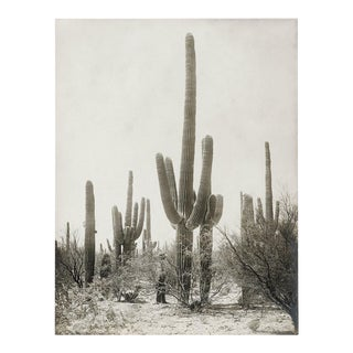 Vintage Cactus Photo - 1900s Tuscon - Vintage Desert Print For Sale