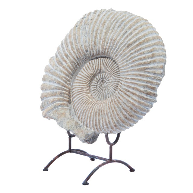 ANCIENT AMMONITE FOSSIL STATUE For Sale - Image 10 of 10