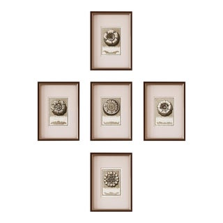 Rosettes - Unframed Set of 5 Prints For Sale