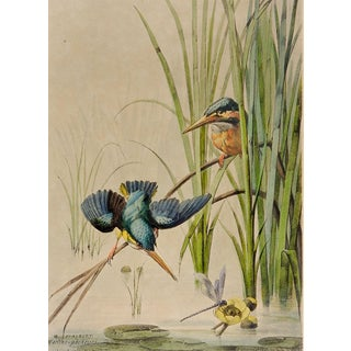 1880's Kingfisher Lithograph For Sale