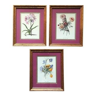 Framed Botanical Prints - Set of 3