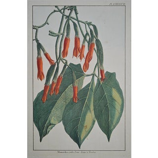 "Rare 18th Century Hand Colored Botanical Engraving Plate LXXXVII From ""Jardin D'Eden"" by Pierre Joseph Buchoz For Sale"