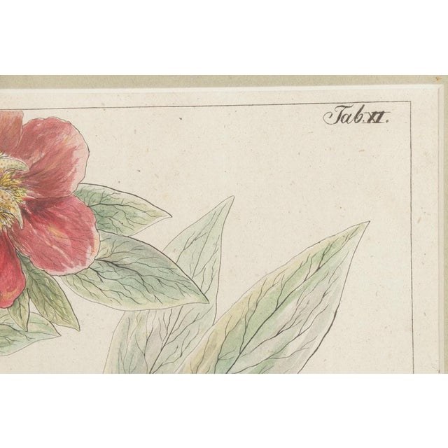 Mid 19th Century 19th Century Hand-Colored Botanical Lithograph Pair For Sale - Image 5 of 10