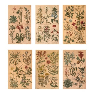 Antique Botanical Prints From the Book 'A Complete Body of Gardening Dated 1757 by John Hill - Set of 6 For Sale