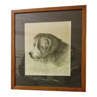 Antique 19th Century Framed Saint Bernard Portrait Drawing