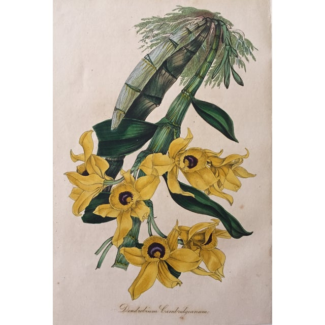 Antique Orchid Flowers 19th Century Lithograph - Image 1 of 3