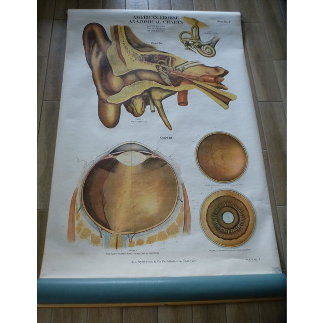 Illustration Vintage American Frohse Ear & Eye Anatomy Chart For Sale - Image 3 of 7