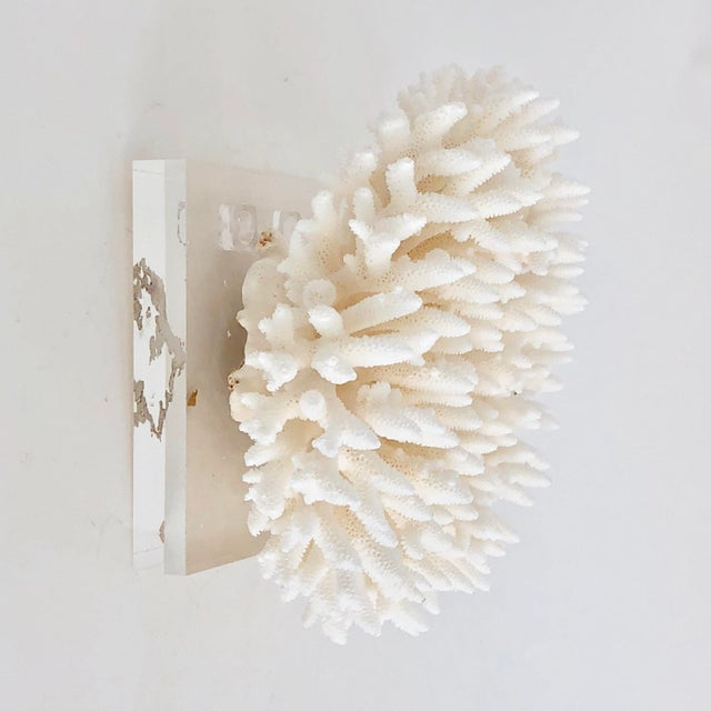 This specimen piece of white Table Coral is mounted on a thick cut and polished Lucite base with hardware to be wall...