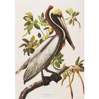 """1960s Audubon """"Brown Pelican"""", Cottage Style Vintage Print For Sale"""