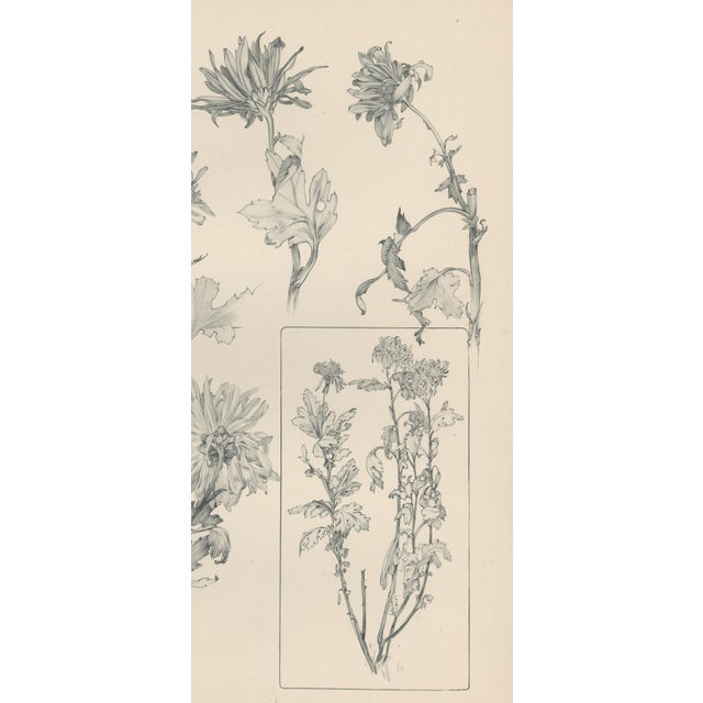 1904 Art Nouveau Botanical Drawing by Mucha - Image 3 of 4