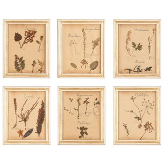 Set of 6 French Frames with Pressed Botanicals, Circa 1930s