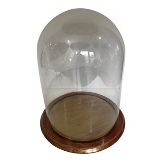 Glass Display Diorama Dome Wood Pedestal For Sale