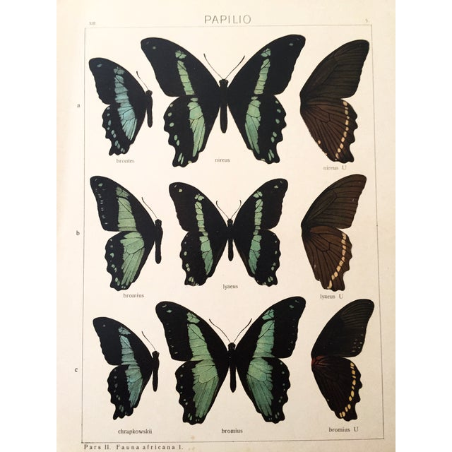 Butterfly Specimen Lithograph, 1910 - Image 1 of 2