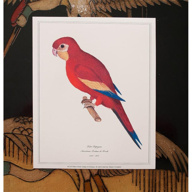 Printmaking Materials 1590s Parrot Set of 3 by Anselmus De Boodt For Sale - Image 7 of 10