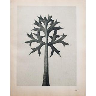 Blossfeldt 2-Sided Photogravure N29-30