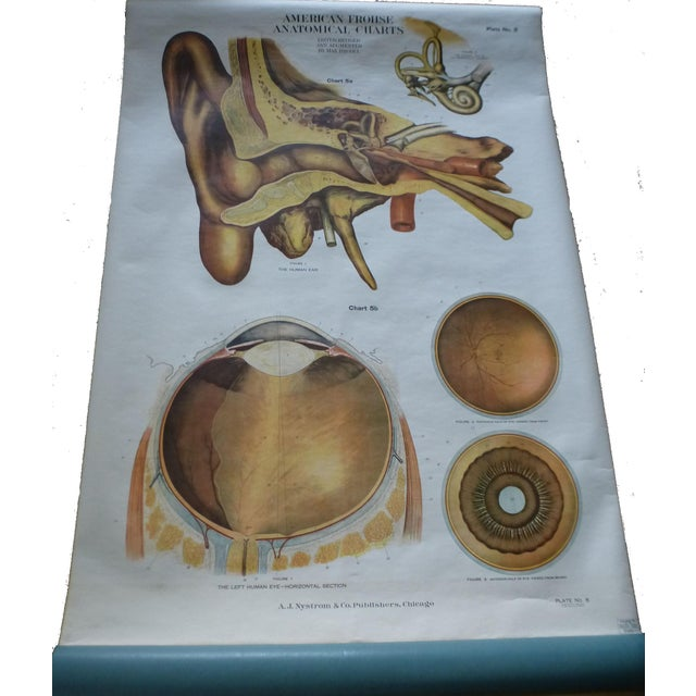 Wood Vintage American Frohse Ear & Eye Anatomy Chart For Sale - Image 7 of 7