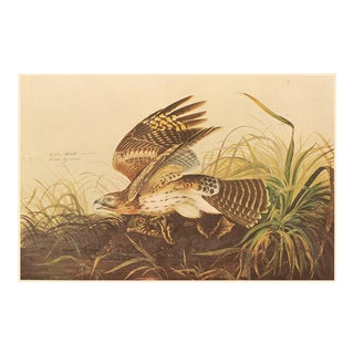 Winter Hawk and Bull Frog by Audubon, XL Vintage Cottage Print For Sale
