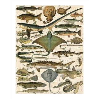 Vintage Sea Creatures Archival Print For Sale