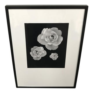Framed Photograph of Three Roses in Bloom For Sale