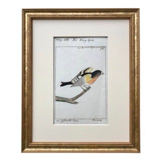 Original Antique Watercolor Bird Ornithological Study C.1800 For Sale