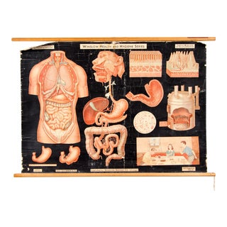 Vintage 1930's Denoyer-Geppert Co. Anatomical Digestion Chart For Sale