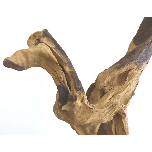 """""""Kangaroo"""" a Petrified Wood Sculpture from the Amazon by Artist Valeria Totti For Sale - Image 5 of 11"""