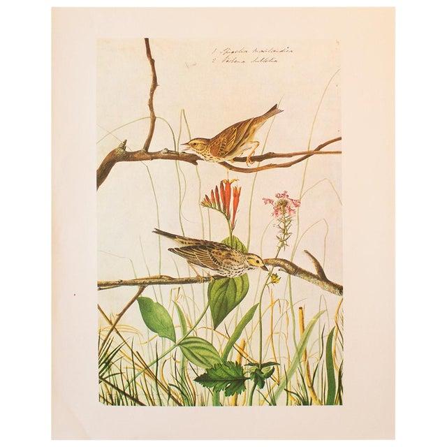 1960s Vintage Savannah Finch and Savannah Sparrow Cottage Print by Audubon For Sale