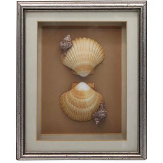 Framed Seashells Collage Wall Art For Sale