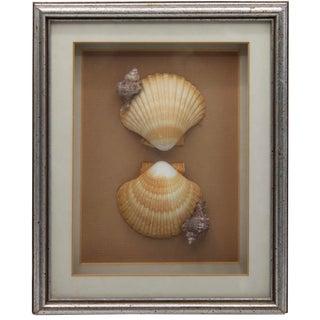 Vintage Framed Seashell Collage For Sale
