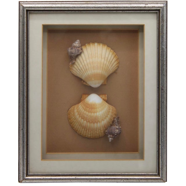 Vintage Framed Seashell Collage For Sale