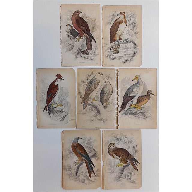 These seven hand colored engravings depict varieties of birds of prey. They were printed in England c.1841. Printed on one...